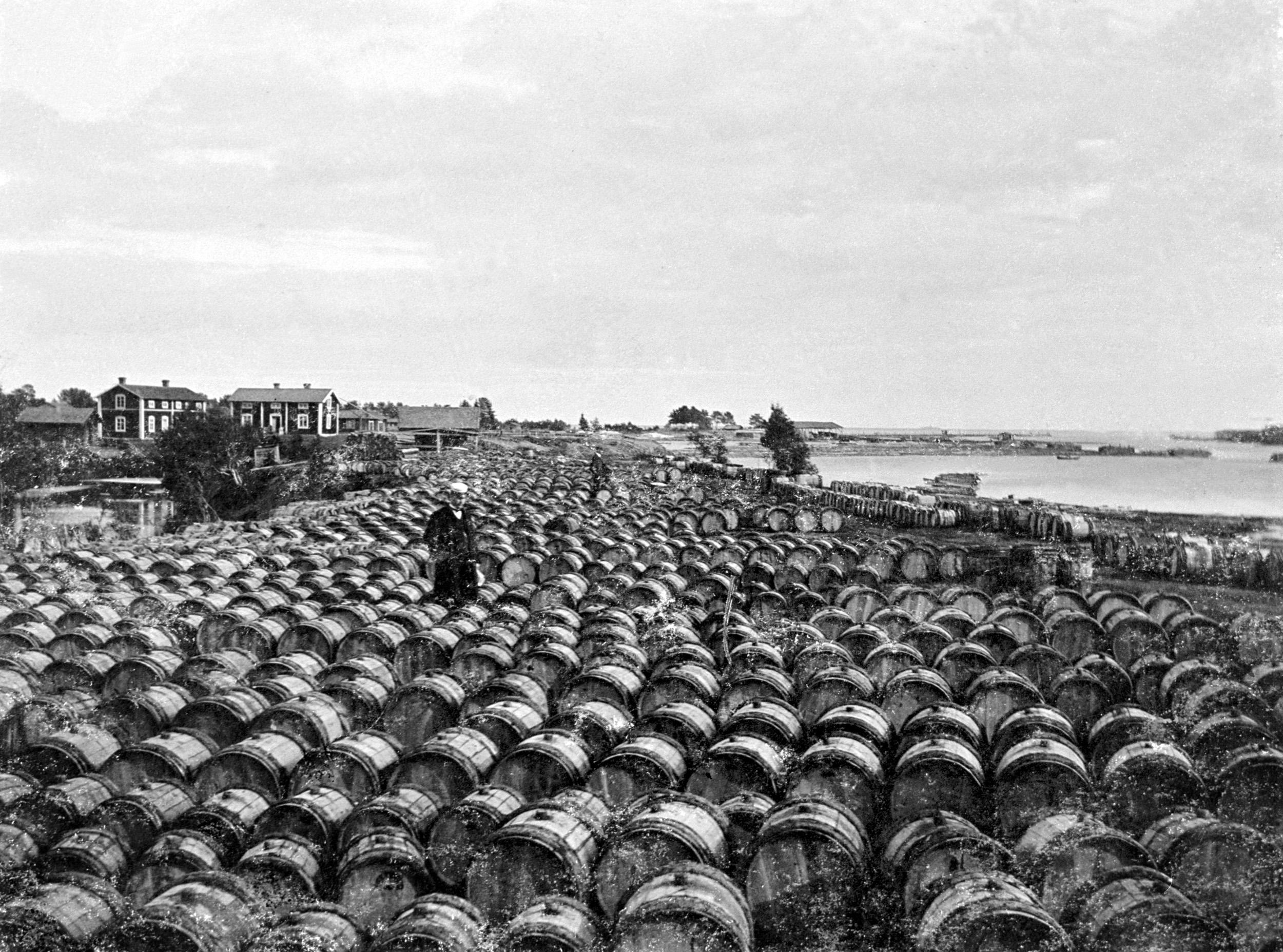 Ca 5000 tjärtunnor på Tjärholmen i Byske, 1905.